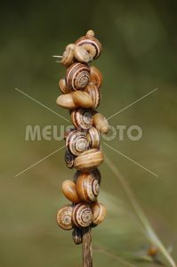 Gruppo of snails - MeusPhoto