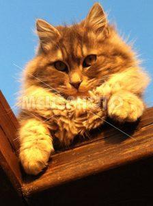 Red cat looking - MeusPhoto