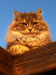 Red cat on wood - MeusPhoto