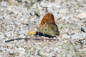 Butterly on the ground - MeusPhoto