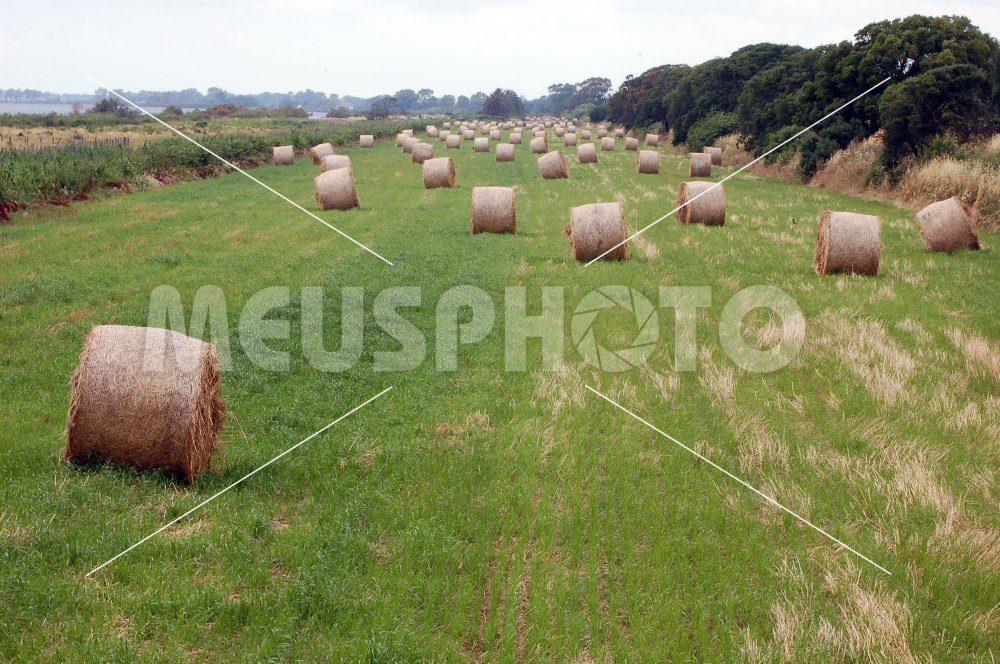 Hay bales on field - MeusPhoto