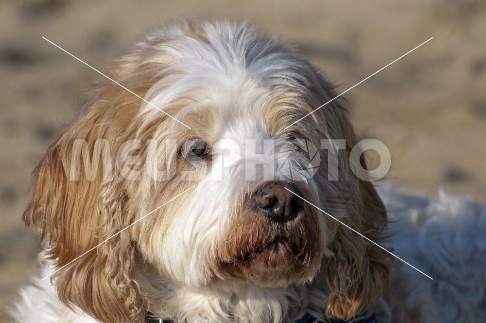 Portrait of a dog at the beach - MeusPhoto